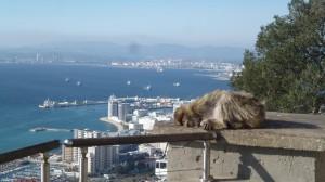 2015-01-26_29_Malaga_Gibraltar_330