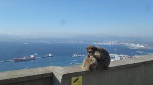 2015-01-26_29_Malaga_Gibraltar_333