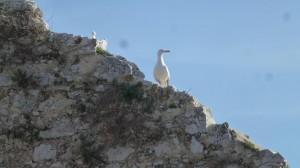 2015-01-26_29_Malaga_Gibraltar_336