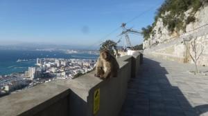 2015-01-26_29_Malaga_Gibraltar_337
