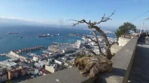 2015-01-26_29_Malaga_Gibraltar_338