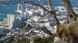2015-01-26_29_Malaga_Gibraltar_339